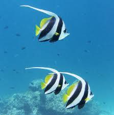 L'eau limpide permet de profiter des fonds marins somptueux
