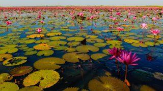 Udon Thani : Top 5 des meilleurs endroits à visiter