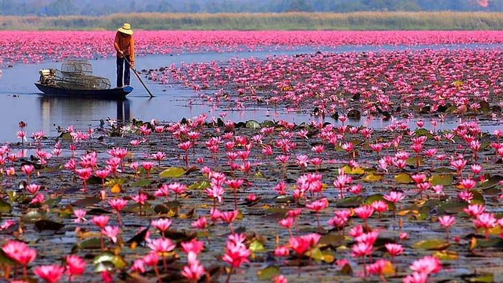 Mer de Lotus Rouge, Udon Thani