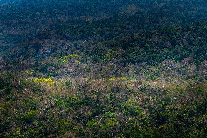 Pang Sida, un des parcs nationaux en Thaïlande