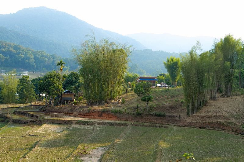 Doi Inthanon, un des parcs nationaux de Thaïlande