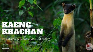 Le complexe forestier de Kaeng Krachan, ajouté au patrimoine mondial de l'Unesco